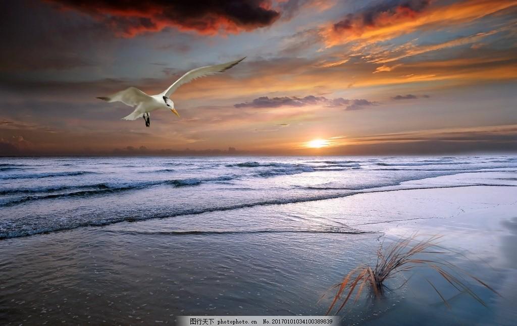 海鸥 晚霞 天 天空 蓝天 唯美 风景 风光 自然 日出 摄影