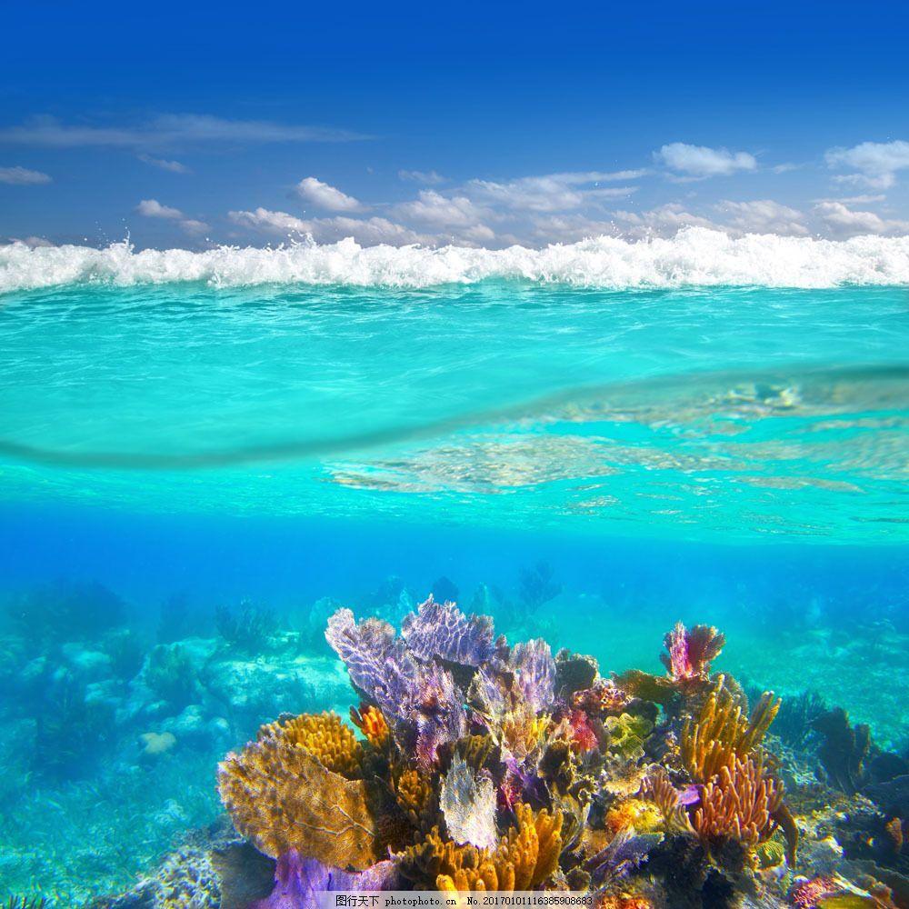 海底五颜六色的珊瑚图片素材 五颜六色 水下 海底 礁石 珊瑚 水下摄影