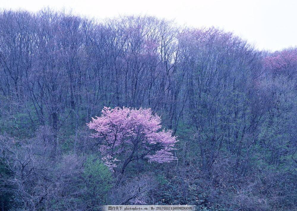 桃花林图片素材 树 树木 树林 大树 树干 茂盛 大自然 桃花树 花草