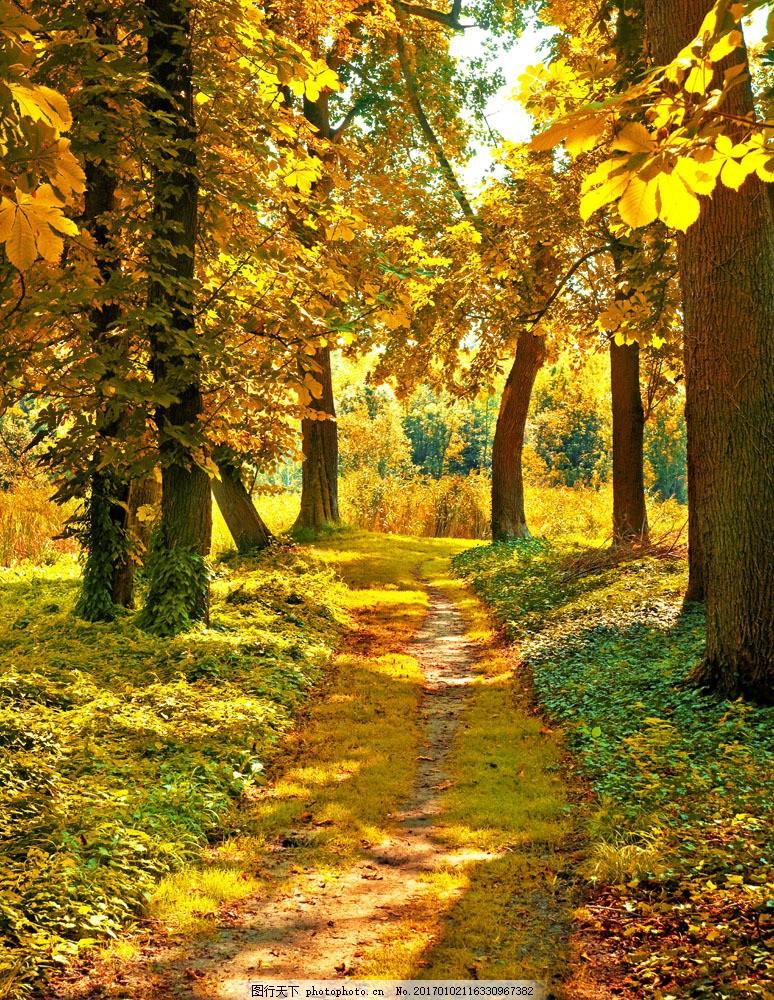 秋天 落叶 林间小道 小路 金花色的树叶 自然 景色 山水风景 风景图片
