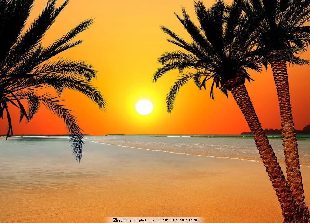 夕阳椰子树海面风景图片