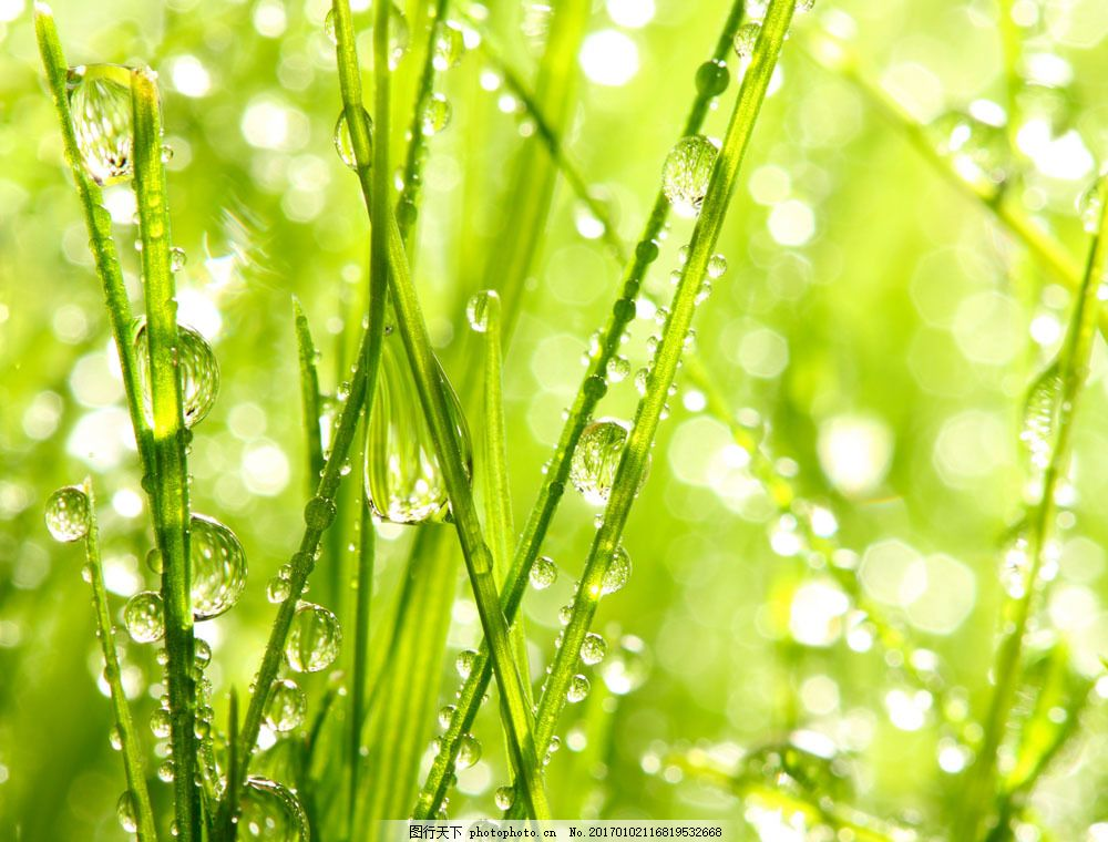 清新草地图片素材 风景 季节 春天 草地 清新 绿色 自然 朦胧 唯美