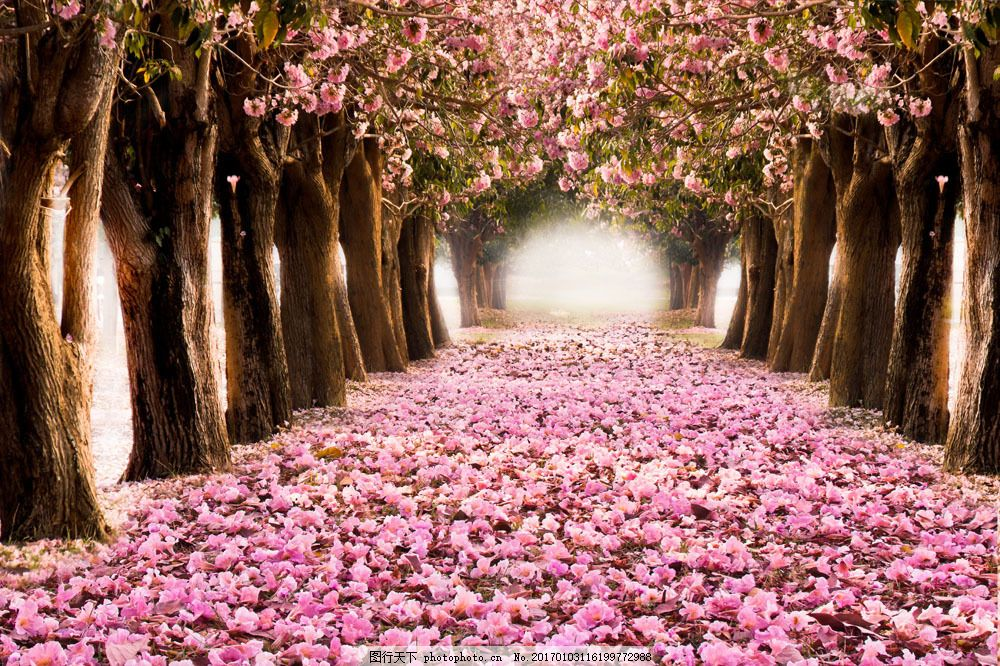 落花满地的花树风景图片