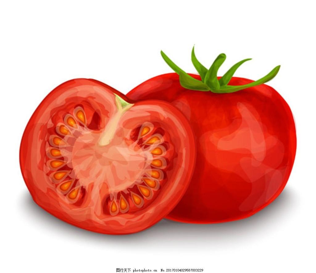 手绘水彩番茄西红柿