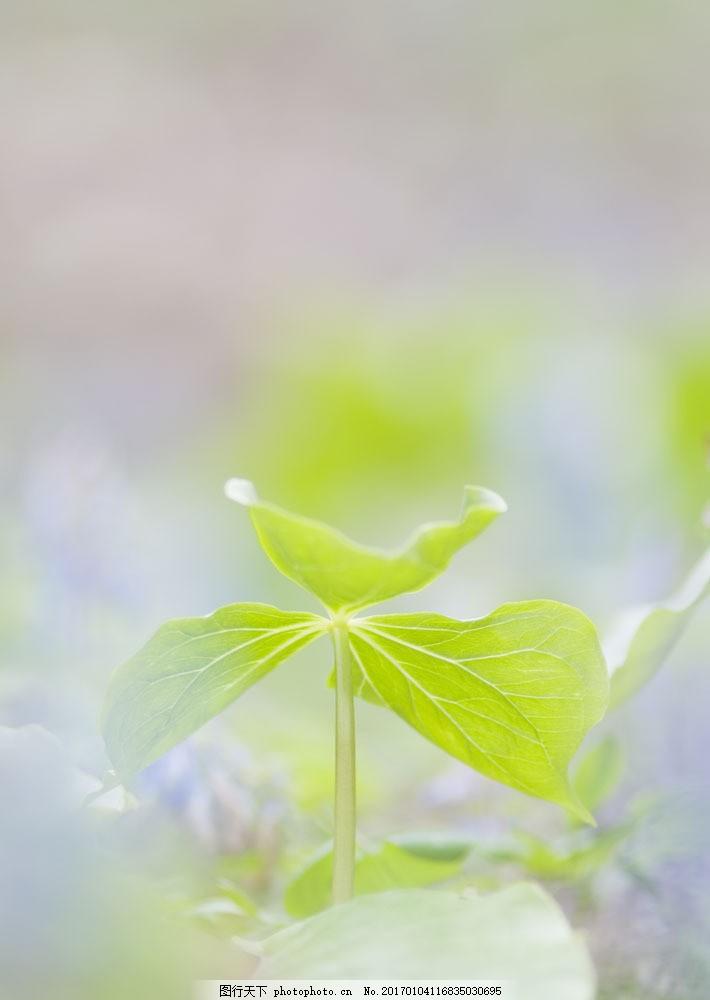 绿色清新叶子背景图片