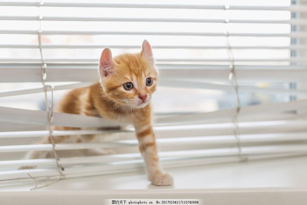 穿过百叶窗的猫咪图片素材 猫咪 小猫 可爱动物 窗户 百叶窗 其他类别