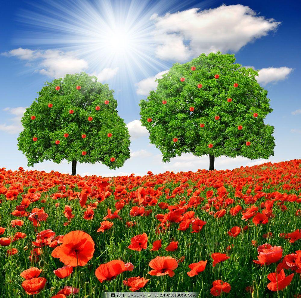 美丽鲜花风景图片