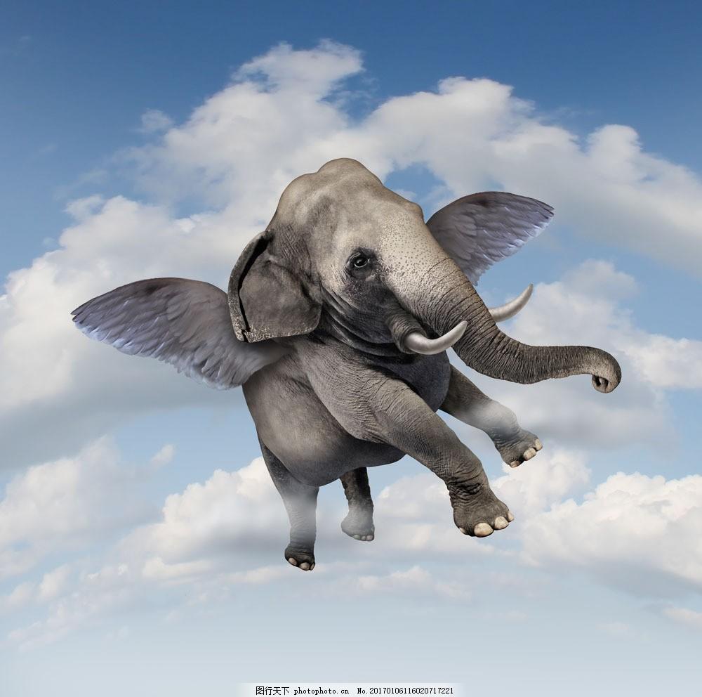学画会飞的动物