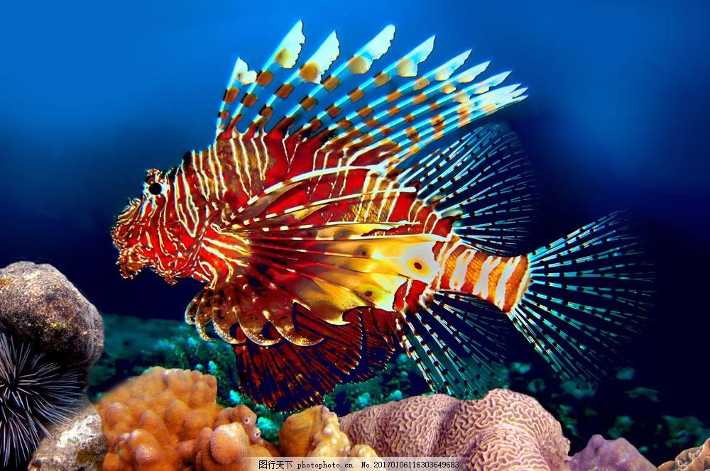 海底世界 海底生物 鱼类 鱼 海藻 珊瑚 海洋生物 水生动物 大海图片