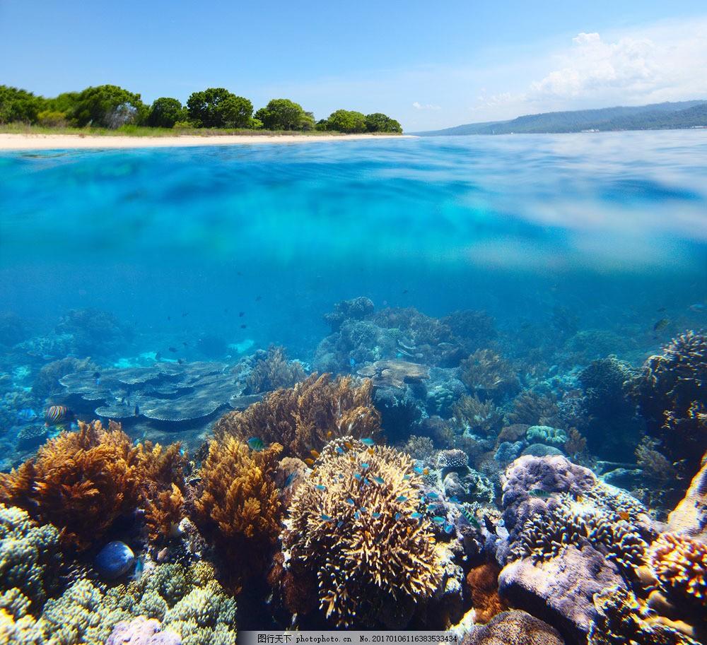 海底世界 海底世界图片素材 大海 海浪 沙滩 树山 珊瑚 海底生物