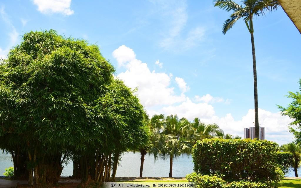 湖边 海边 沙滩 椰树 礁石 蓝天 白云 油画 文化艺术 绘画书法