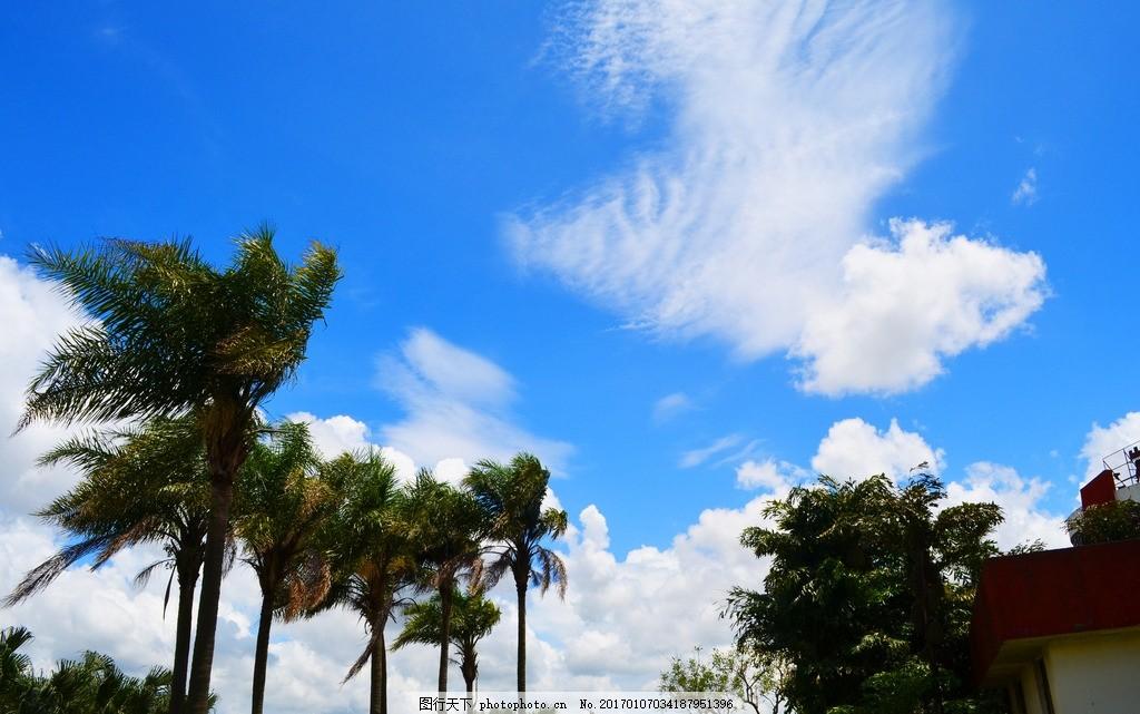 天空 海边 沙滩 椰树 礁石 蓝天 白云 油画 文化艺术 绘画书法