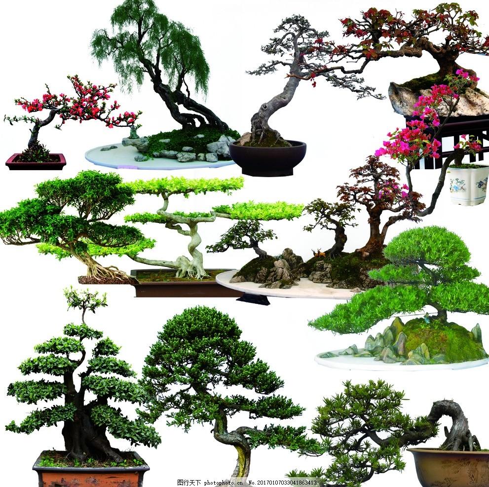 盆景 盆栽 松树 盆景小品 盆景艺术 盆景树木 盆景作品 园艺 素材