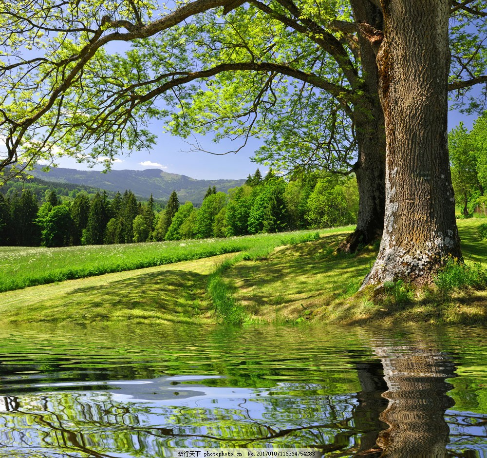 水边的一棵大树图片素材 蓝天 白云 大树 草地 高山水 倒影 树在水里