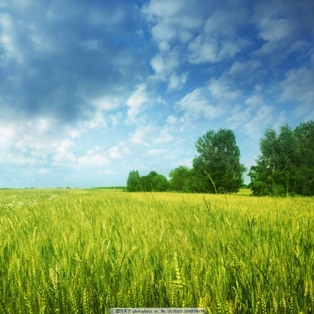 美丽麦田风景图片