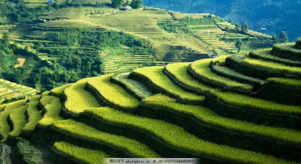 绿色梯田美丽风景图片