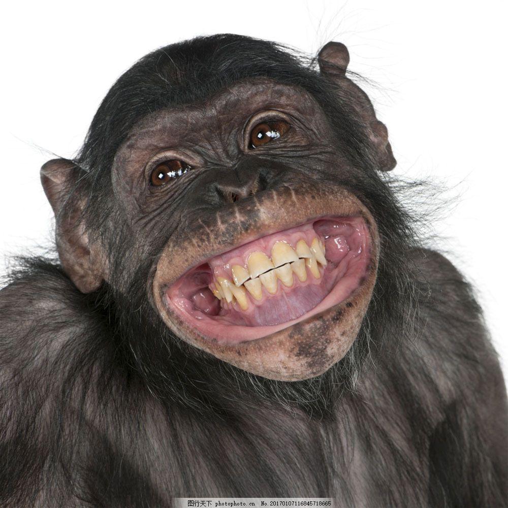 张大嘴巴的猩猩 张大嘴巴的猩猩图片素材 动物世界 动物摄影 野生动物