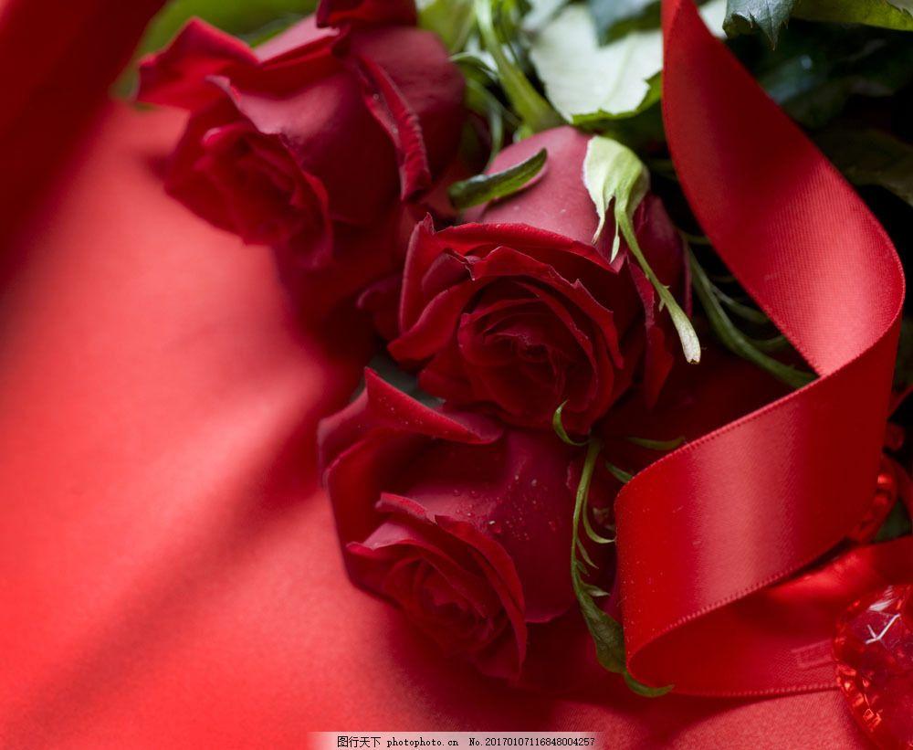 花卉 鲜花背景 玫瑰花 红玫瑰 丝带 浪漫 花草树木 生物世界 图片素材图片