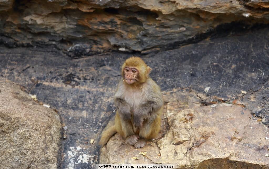 猴 猴子 猴哥 动物园 动物园猴子 石头上的猴子 动物 摄影 生物世界