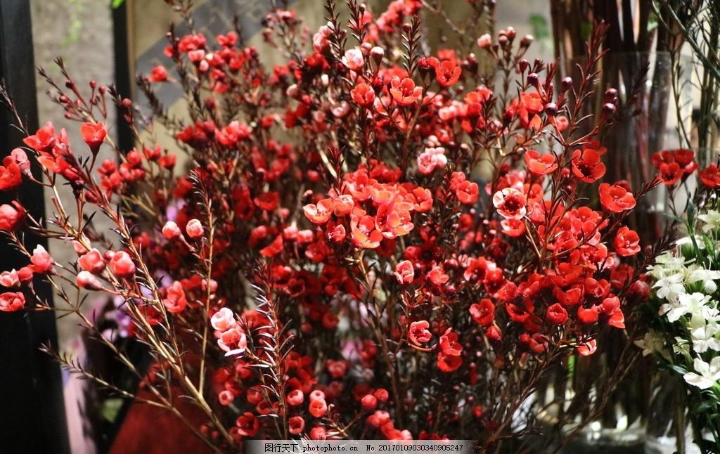 花束 红花 鲜花 花店 花圃 小红花 静物 食品 摄影 生活百科