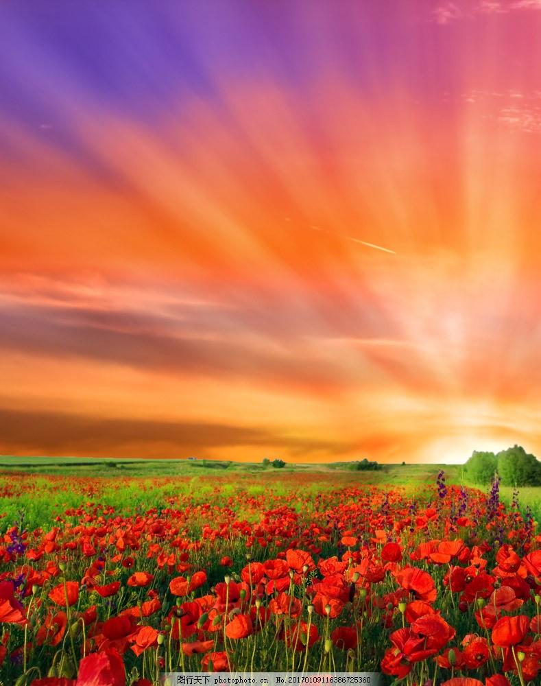 花卉背景 春天背景 鮮花草地 黃昏美景 底紋背景 山水風景 風景圖片