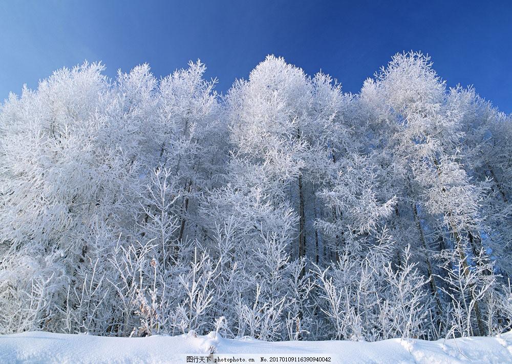 冬季树林风景图片素材 四季风景 美丽风景 美景 冬天雪景 雪地 积雪
