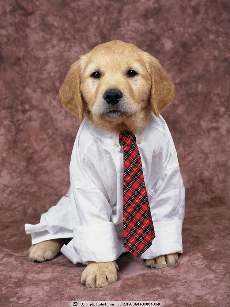 小狗 狗狗 宠物 宠物狗 穿西服 萌 可爱 超萌 卖萌 可爱动物 蹲着的