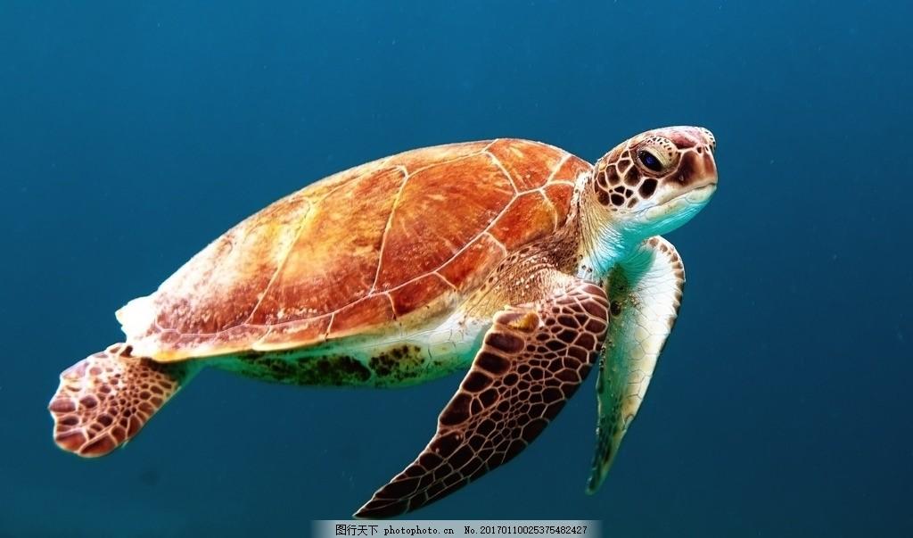 乌龟 海洋 生物 海底世界 动物 保护动物 大海里的动物 海洋生物 海龟