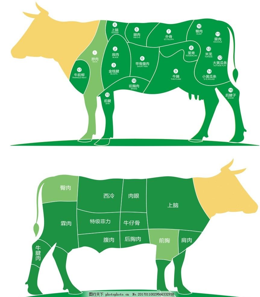 牛肉部位 牛排部位 分解图 牛分解图 牛肉营养价值 牛部位分解图 设计