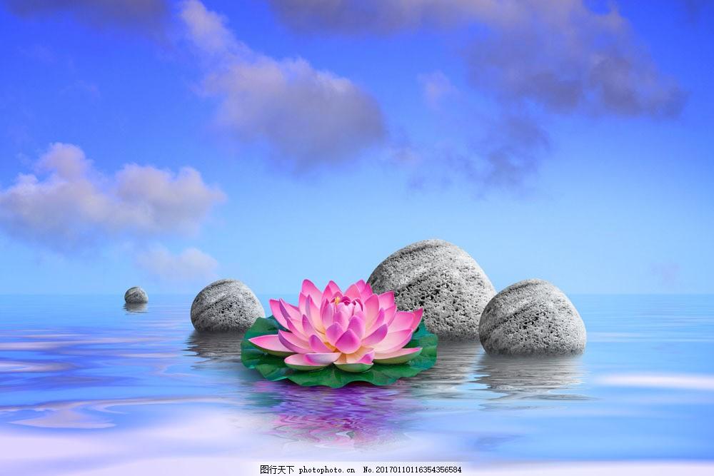 美丽荷花与石头 美丽荷花与石头图片素材 莲花 美丽鲜花 花朵 水面
