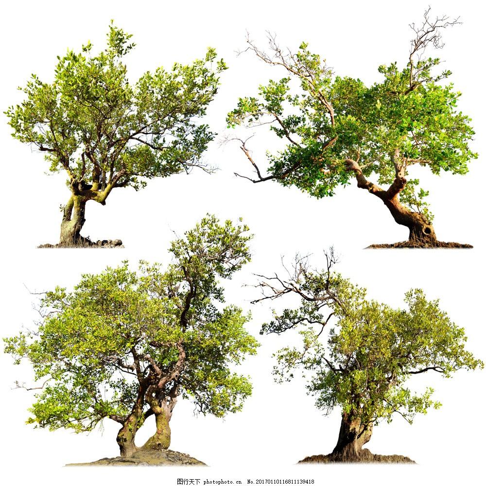 苍天大树 苍天大树图片素材 古树 绿树 树木 树林 绿叶 叶子