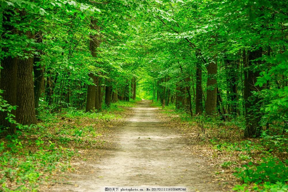 森林小路景色 森林小路景色图片素材 树林风景 林间小路风景 道路风景