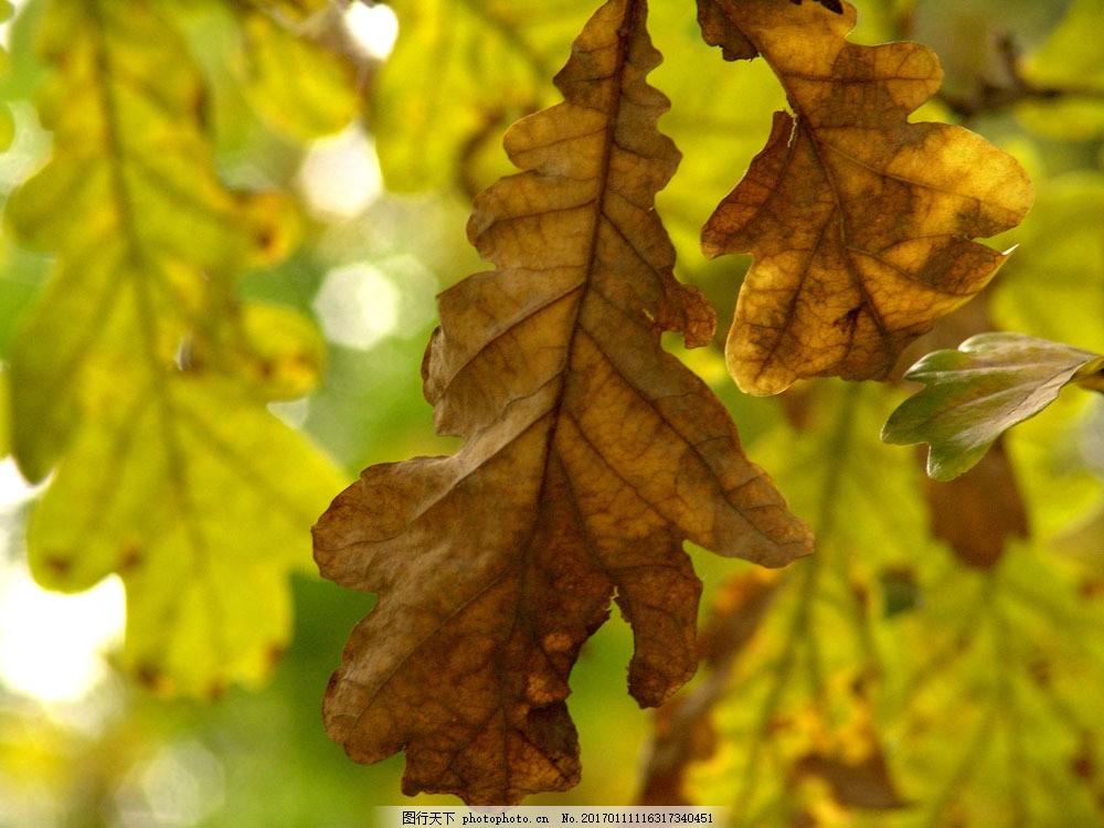 秋天枫叶 秋天树叶 秋季 枫叶 落叶 花草树木 秋天美丽风景 自然风光