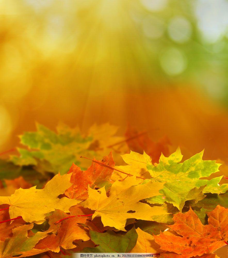 遍地的枫叶 遍地的枫叶图片素材 秋天落叶 叶子 叶片 秋天主题