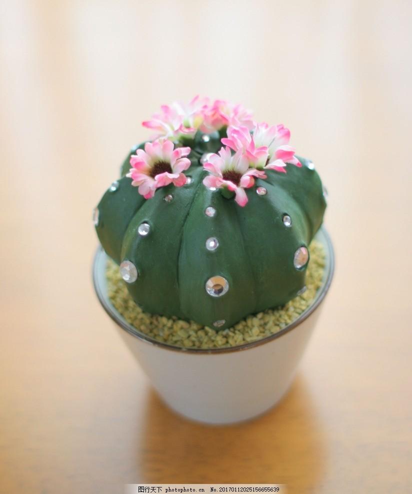 小清新 文艺 观赏性植物 仙人掌 仙人球 温室植物 金琥 朱蕉 摄影