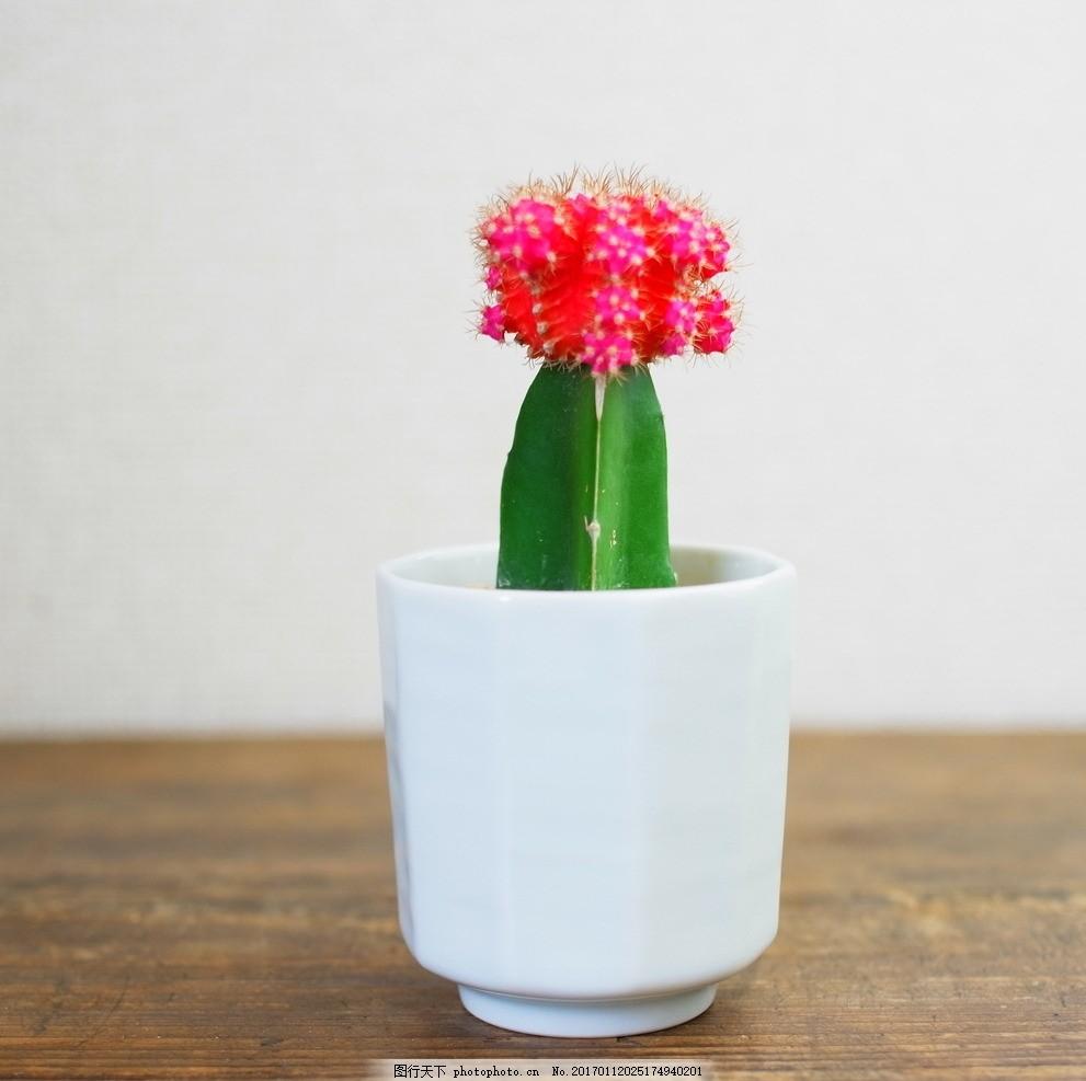 盆景 盆栽 瓶子 植物 991_987图片