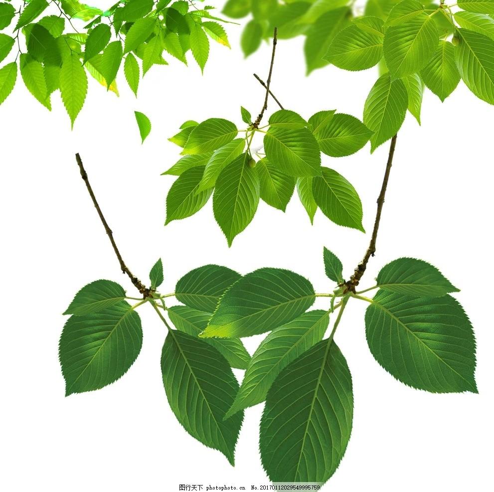 树叶花朵 树叶素材 绿色树叶 绿色叶子 动感树叶 春天素材 春季素材