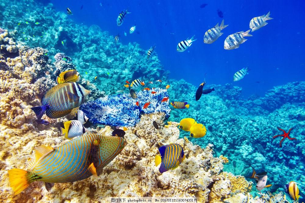 海底鱼群珊瑚图片素材 瑚珊 海底鱼类动物 海底世界 海水 海洋生物