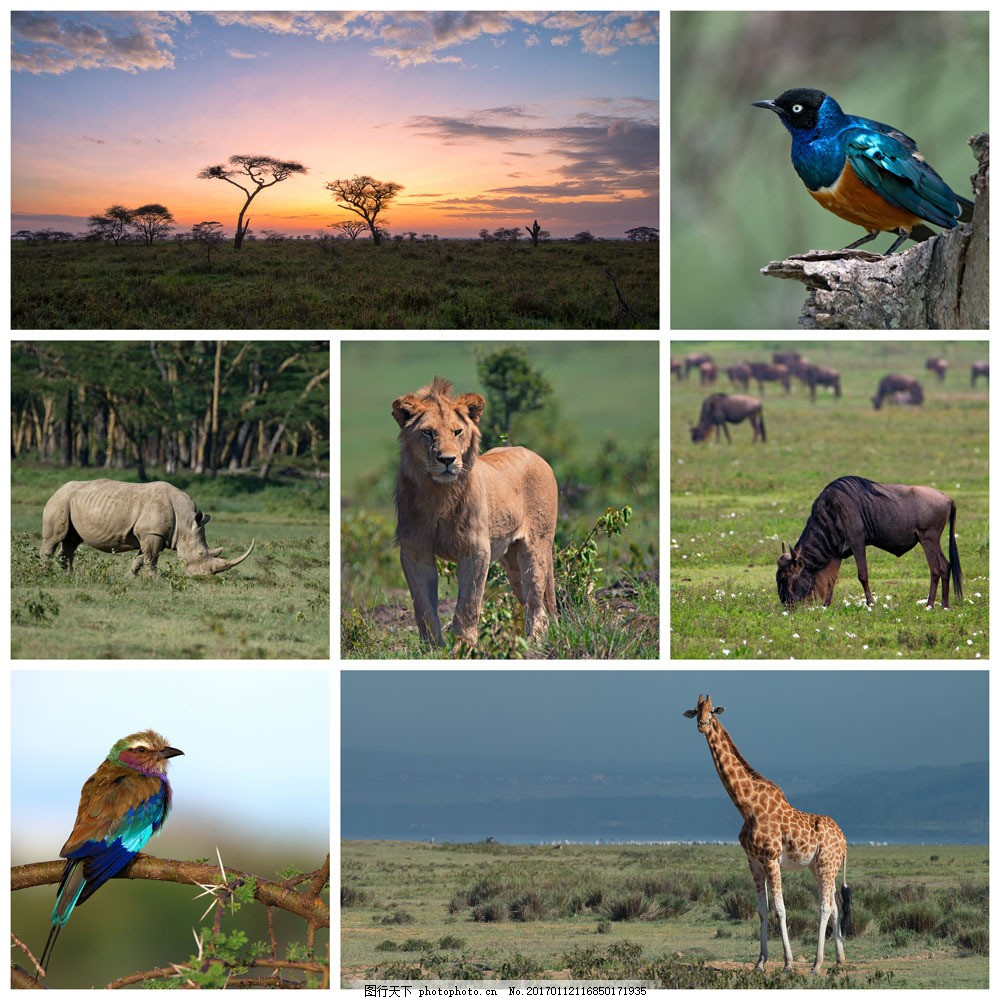 非洲野生动物 非洲野生动物图片素材 非洲草原风光 小鸟 犀牛 长颈鹿
