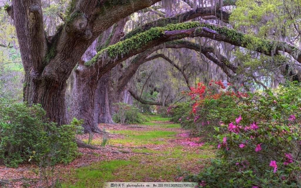 美丽的树林景色高清 叶子 春季 清晨 阳光 风景图片 清晨阳光