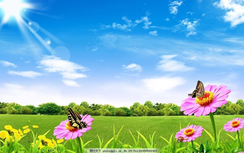蓝天草地花朵,白云 自然风景 背景 绿草地 蓝天草地
