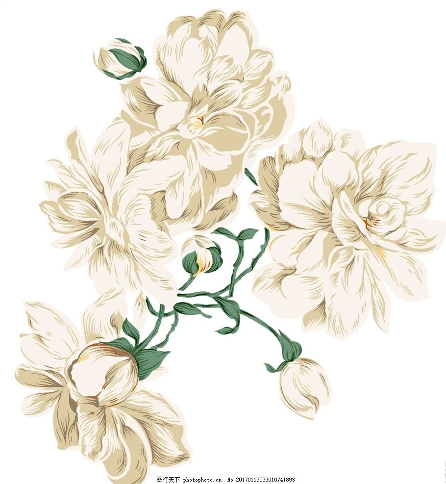 手绘仿真花朵图案 手绘花 花藤 花朵 白色牡丹花 花卉 高清 psd 分层