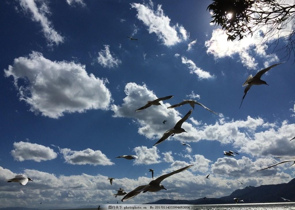 昆明 滇池 海鸥 蓝天白云 无雾霾 风景 摄影 旅游摄影 国内旅游 72dpi