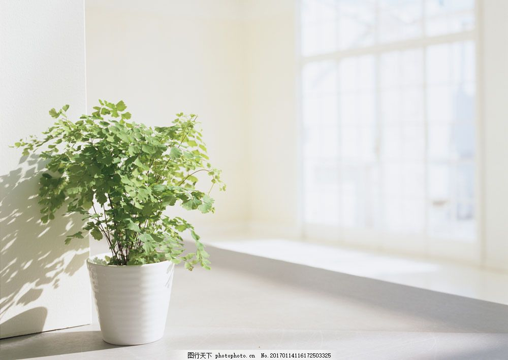 室内绿色植物盆栽 室内绿色植物盆栽图片素材 现代风格 室内设计