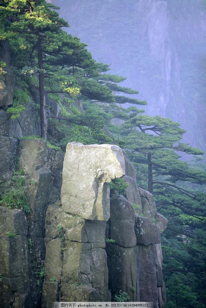 设计图库 高清素材 自然风景  黄山石壁上的松树图片素材 黄山 安徽省