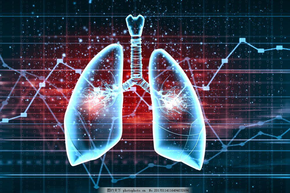 人体各脏器分布�_科技感蓝色折线图和肺部 科技感蓝色折线图和肺部图片素材 人体脏器