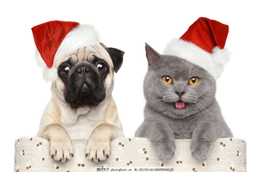戴帽子的小狗与小猫图片