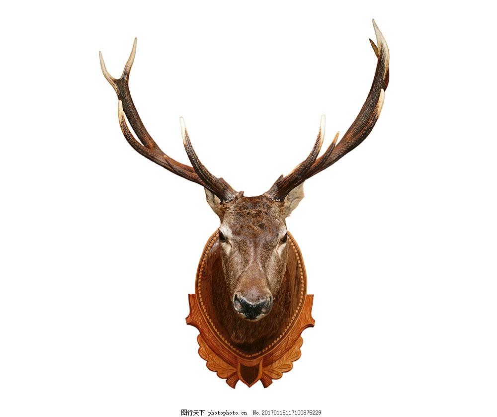 麋鹿头装饰 麋鹿头装饰图片素材 猎物 室内装饰品 鹿角 鹿茸 其他类别