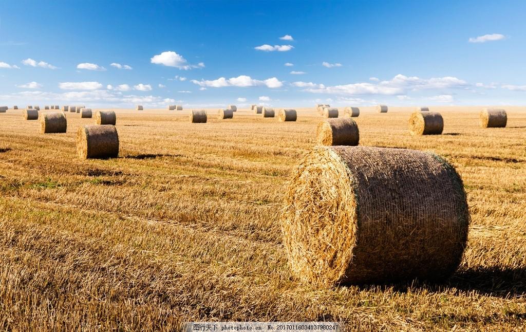 设计图库 淘宝电商 日用家居  收割后的麦田摄影图片下载 麦田 小麦