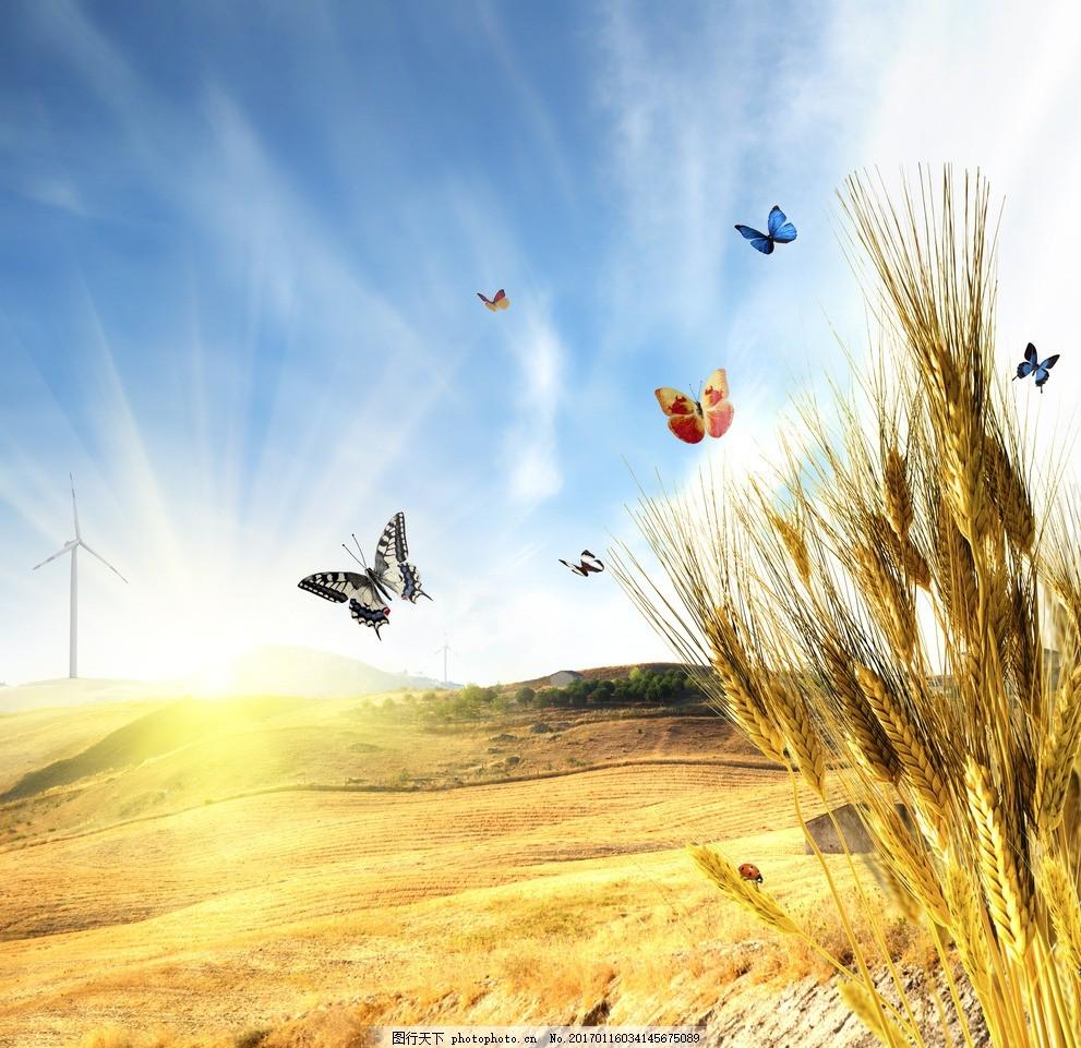粮食 丰收 农作物 自然美景 光芒 麦子 秋天 摄影 自然景观 自然风景